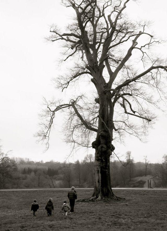 Familia cerca a árbol