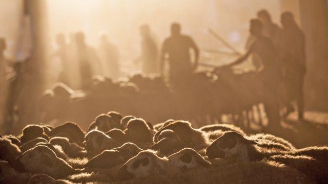 Mercado bovino