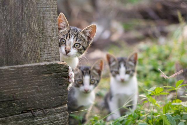Bisa Anda Tebak Mana Kucing Liar Dan Mana Kucing Piaraan Bbc News Indonesia