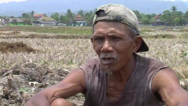 Indonesian rice farmer