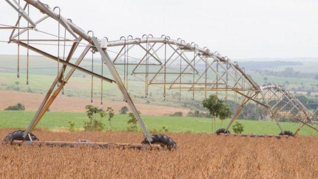 Plantação de soja em Brasília