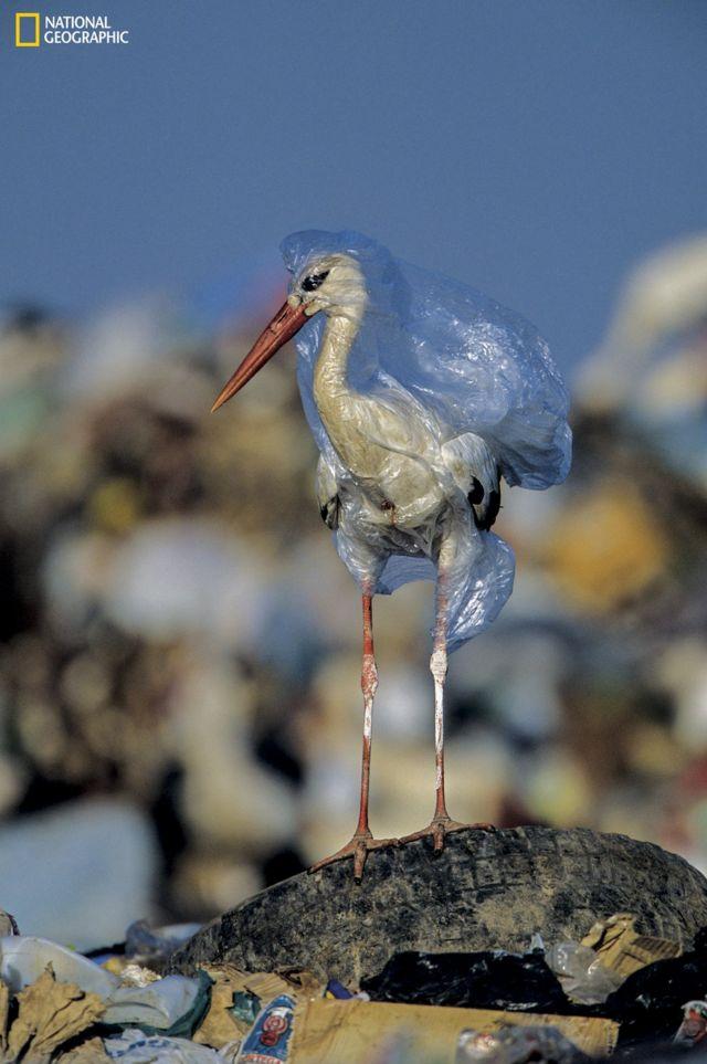 plastik torbaya takılan leylek