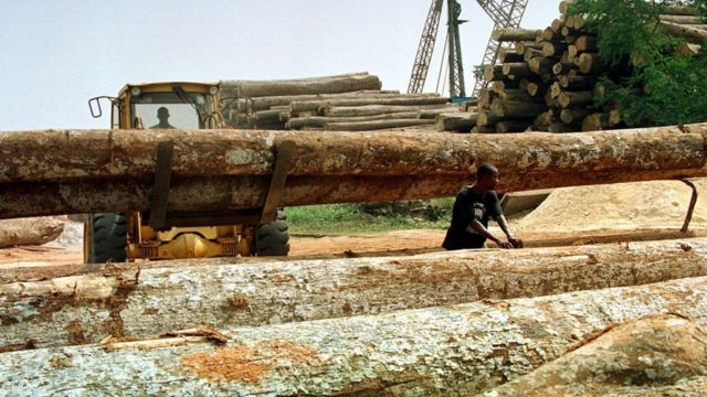 Ghanaian woodcutters wey dey arrange timbers from tress wey dem just cut for one of di many sawmills for Kumasi.