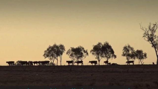 নিউ সাউথ ওয়েলসের বিস্তীর্ণ অঞ্চল জুড়ে চলছে 'দ্য বিগ ড্রাই'