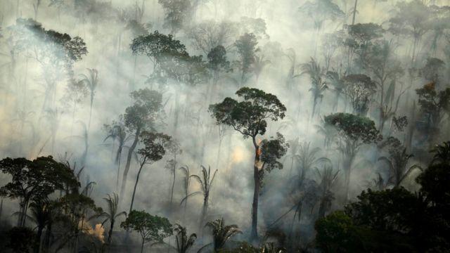 Amazonlarda yangın