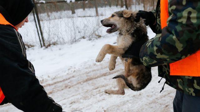 Отлов собак