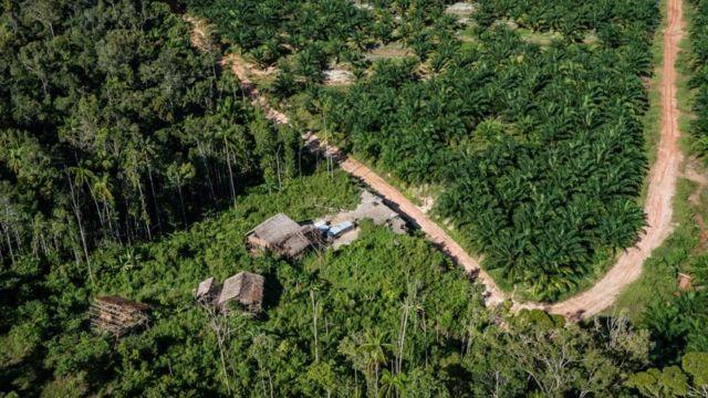 hutan di papua