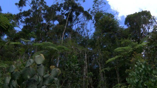 Forest, Madagascar