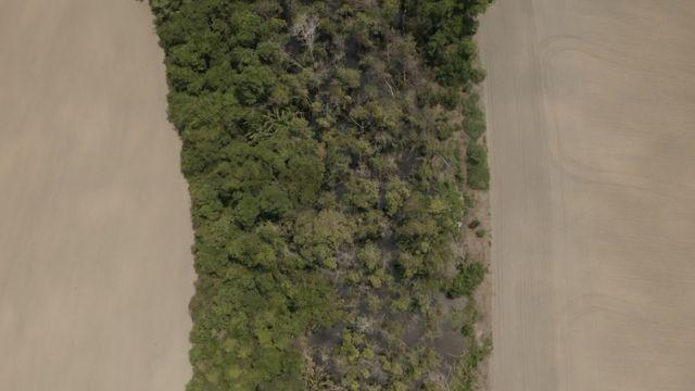 Faixa de floresta ladeada por plantações de soja em Rondônia