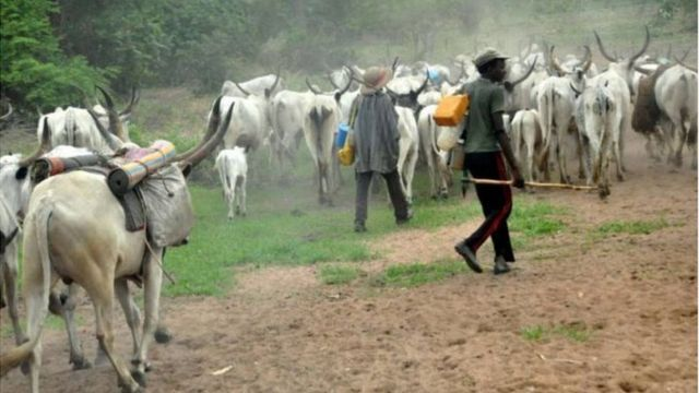 Awọn maalu ati Fulani darandaran