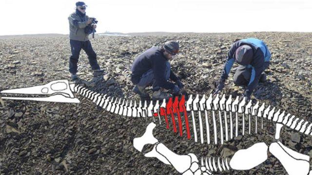 Plesiousaurio. Foto: gentileza Instituto Antártico Argentino