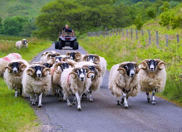 Ферма в Англии