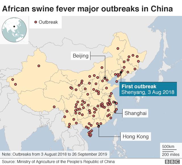 Swine fever outreaks