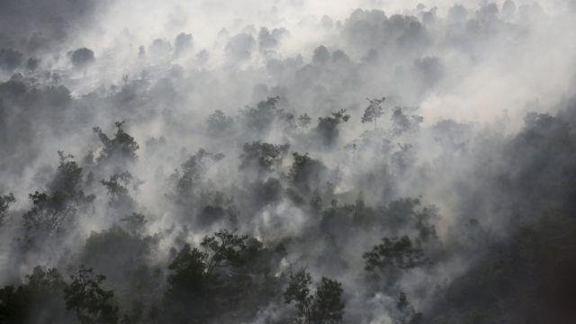 kebakaran, hutan, pemadaman, water bombing