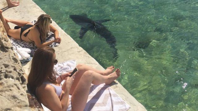 Sydney aquarium to release shark after pool-aided rescue