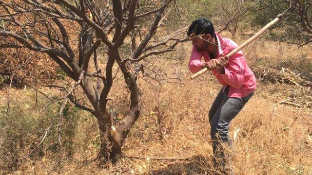 जवळपास दीड हजार झाडं तोडण्यात आली