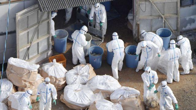 هونغ كونغ تعلن أول وفاة بشرية بأنفلونزا الطيور هذا العام