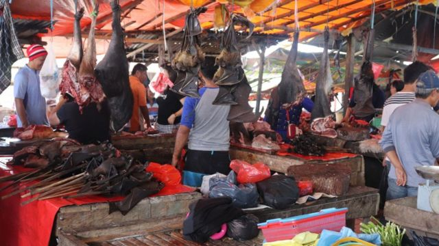Murciélagos y otras especies silvestres en venta en un mercado en Indonesia.