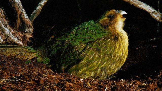 Papagan