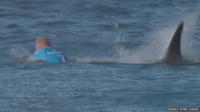 Surfer Mick Fanning I Punched The Shark In The Back
