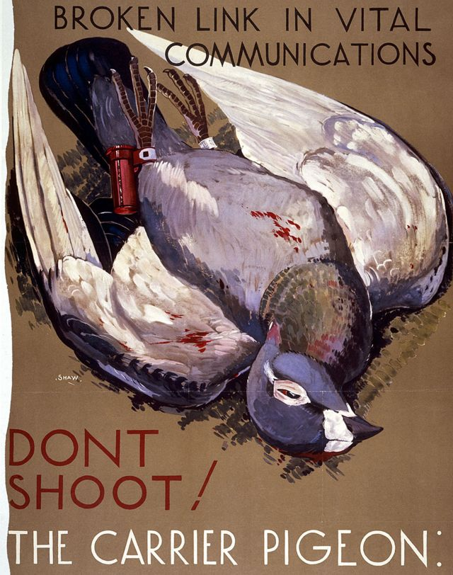 Posters like this one asked people not to kill pigeons as they could interfere with vital communications.