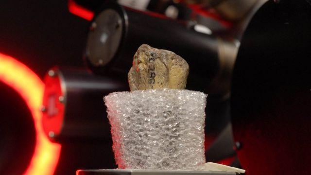 fossil specimen in scanner
