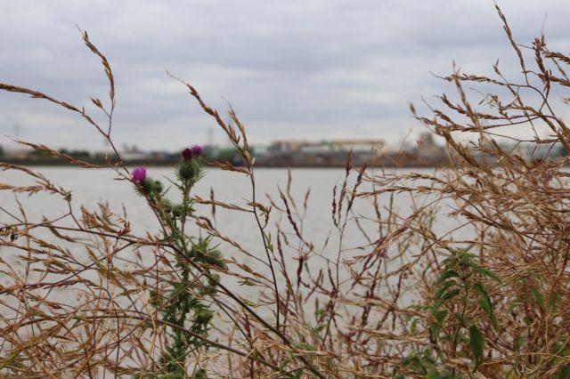 特裏普科克角坐落在泰晤士河一條荒蕪且主要用於工業生產的支流上。