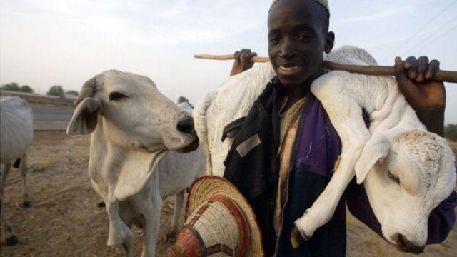 Fulani darandaran kan to gbe ọmọ maalu sọrun