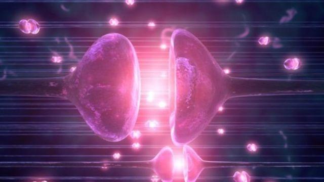 ผลการทดลองพบว่าจุดประสานประสาทหรือไซแนปส์ (Synapse) กลับมาทำงานอีกครั้ง