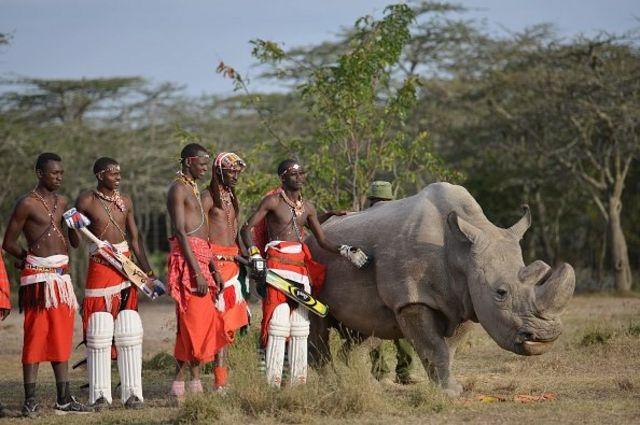 Komunitas lokal di Kenya memiliki sistem perlindungan lingkungan tradisional yang diterapkan