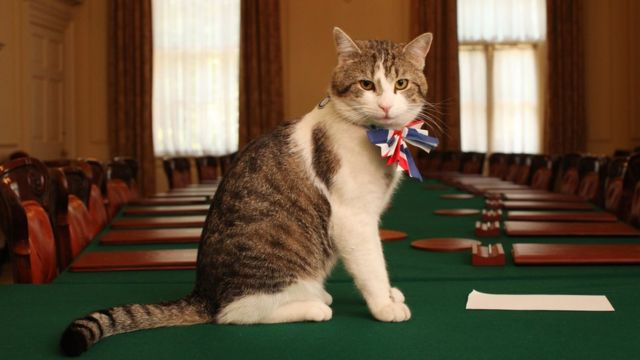 Larry the cat escapes Downing Street eviction