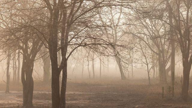 Árvore em meio a fumaça