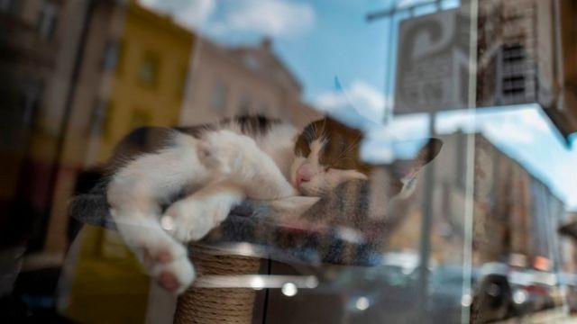 Кот в витрине ресторана в Берлине