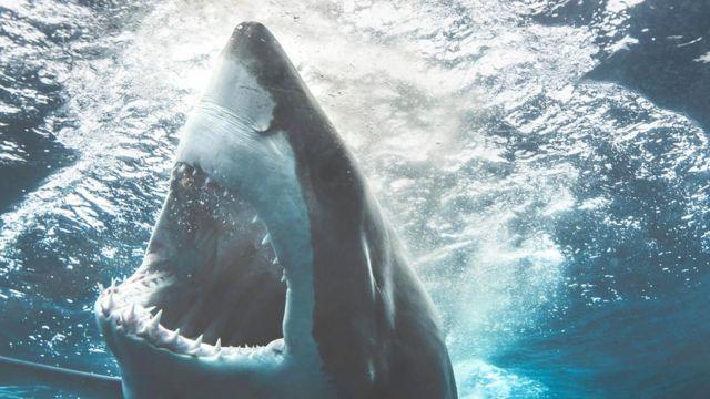 Несмотря на то, что акулы - грозные хищники, они способны доминировать только в океане