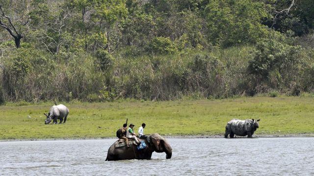 Popisivači nosoroga na slonovima
