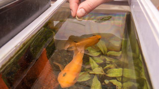 Persona alimentando un pez en un tanque
