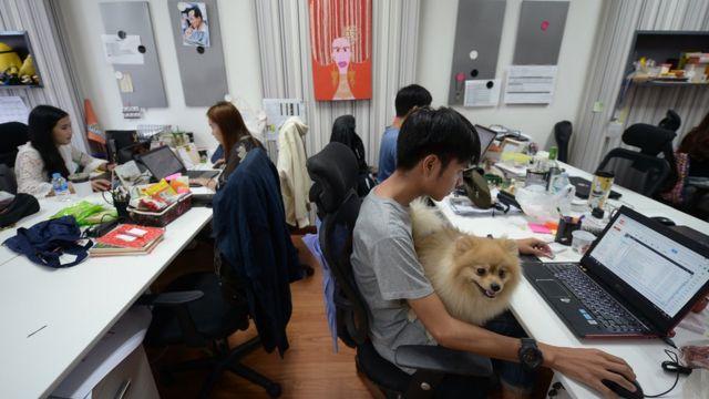สุนัขพันธุ์ปอมนั่งตักพนักงานชายคนที่หนึ่งที่กำลังง่วนกับงาน