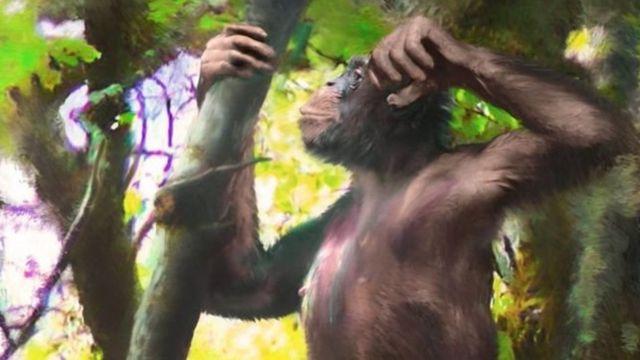 Ilustración de Danuvius guggenmosi