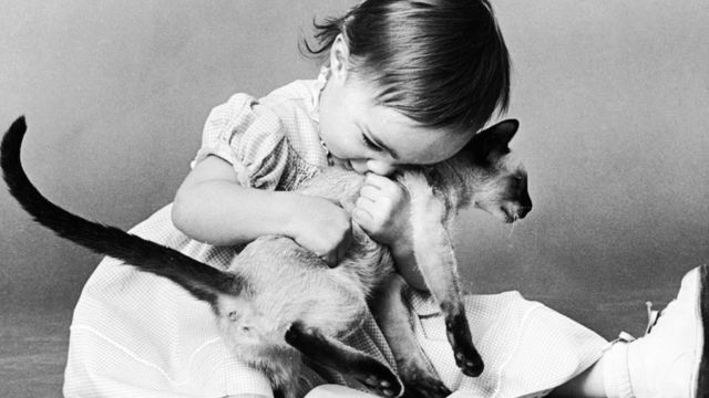 صورة لطفلة تعانق قطة