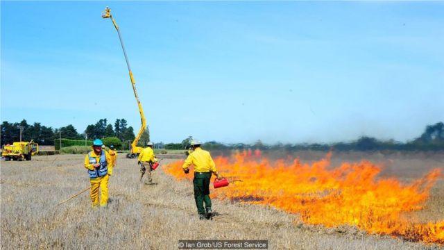 美國林務局採取特別預防措施,確保測試性的火災不會失控。
