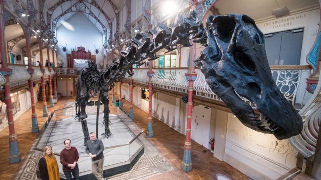 恐龙迪皮在多塞特博物馆展出