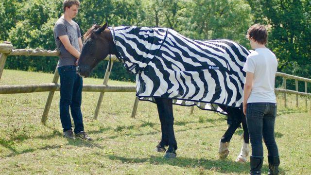лошадь в полосатой попоне