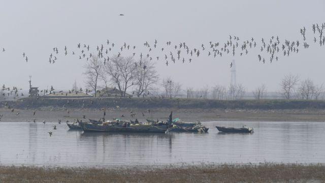 Un grupo de dos tipos de especies de Zarapito en Corea del Norte