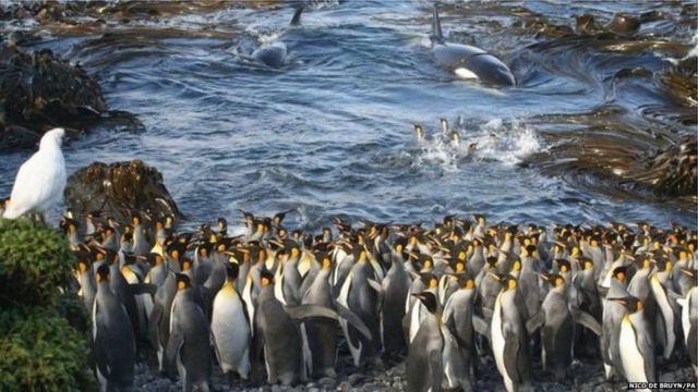 समुद्र किनारी असलेले पेंग्विन्स