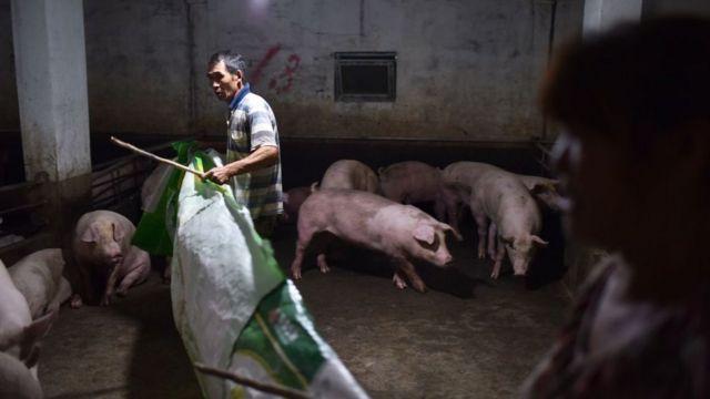 Un criador de cerdos en China