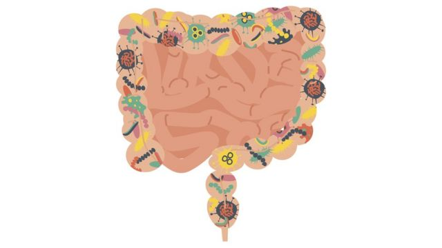 Microbiota in the large intestine