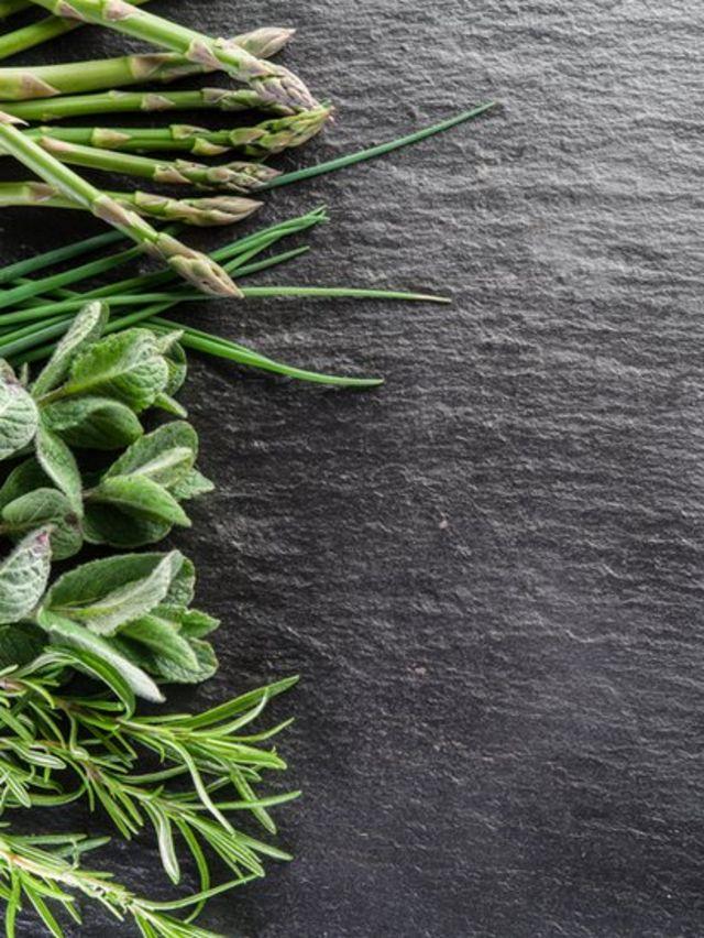 plantas sobre una tabla gris