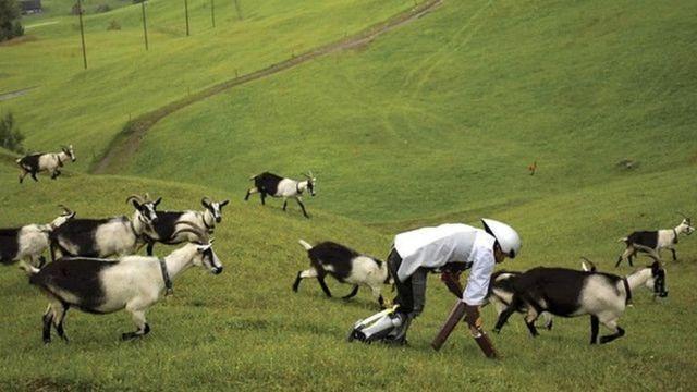 প্রোটিন সমৃদ্ধ ঘাস চাষ শিখতে জার্মানি, নিউজিল্যান্ড, অস্ট্রেলিয়া এবং নেদারল্যান্ডে যাবেন কর্মকর্তারা