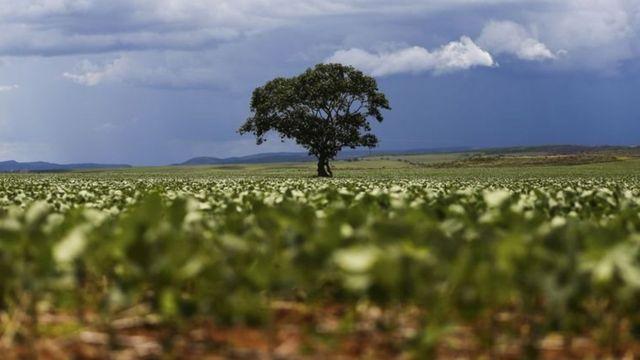 Plantação de soja no município de Alto Paraíso em Goiás