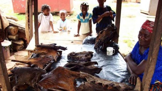 Woman wey dey sell bush meat in Nigeria